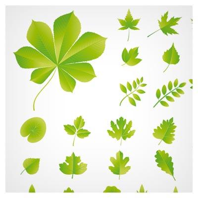 فایل لایه باز وکتور مجموعه برگهای مختلف سبز (Leaf Vector)