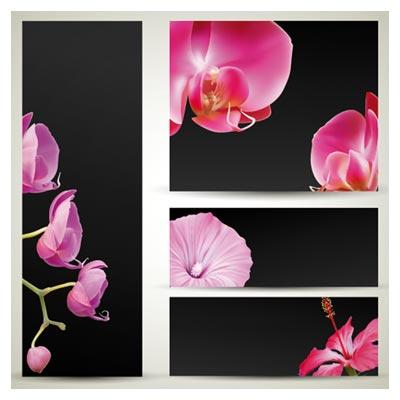 مجموعه قاب وکتوری گلبرگ های گلهای صورتی