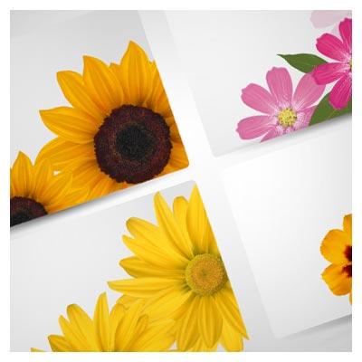وکتور قاب های تزئینی گل (گل آفتابگردان ، گل همیشه بهار)