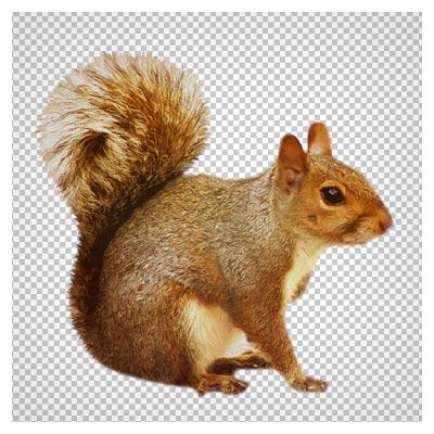 فایل ترانسپرنت PNG سنجاب قهوه ای (Transparent Brown Squirrel)
