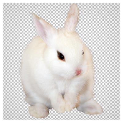 فایل رایگان خرگوش سفید با کیفیت بالا (Cute Rabbit Transparent PNG Picture)