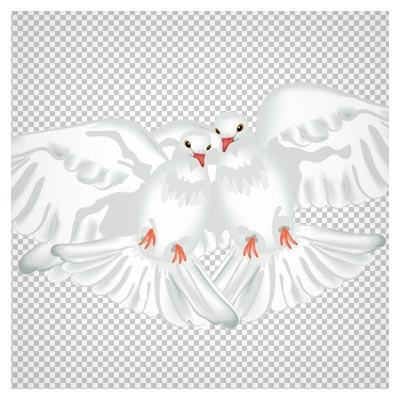 فایل کارتونی png (دوربری شده) کبوترهای عاشق (Dove cartoon PNG)