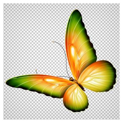 فایل رایگان png پروانه رنگی با کیفیت بالا (Yellow and Green Transparent Butterfly Clipart)