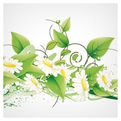 فایل رایگان گل های وکتوری همیشه بهار (Free Green Floral Vector Illustration)