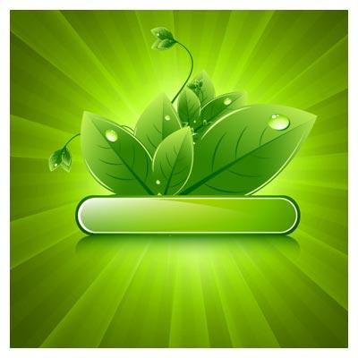 بکگراند و لیبل برگ های سبز (پس زمینه سبز)(Green Leaf Background Vector)