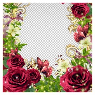 فریم و قاب دوربری شده (png) ترانسپرنت گلهای رز قرمز