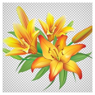 فایل دوربری شده گل های لیلیوم زرد بدون بکگراند