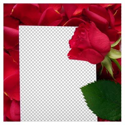 فریم و قاب با گل و گلبرگهای گل رز قرمز