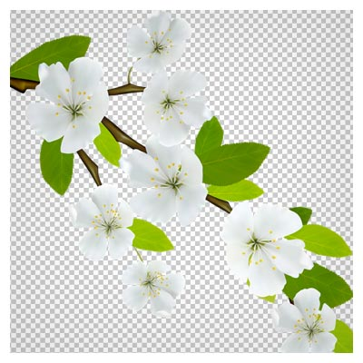 دانلود فایل دوربری شده و PNG شاخه درخت با شکوفه های بهاری