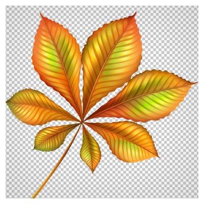 فایل با کیفیت و دوربری شده برگ پاییزی درخت