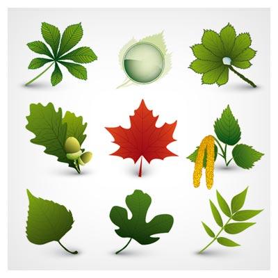 فایل رایگان وکتور مجموعه برگهای درختان مختلف (A Variety Of Leaf Forms)