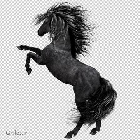 تصویر دوربری شده اسب سیاه با فرمت png (بدون زمینه)(Black Horse PNG Picture )