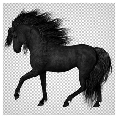 دانلود تصویر دوربری شده اسب سیاه (png بدون بکگراند)(Black Horse Png)