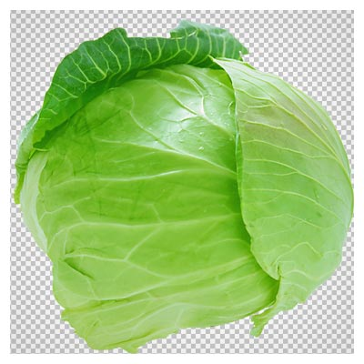 دانلود تصویر PNG و با کیفیت کلم (Fresh Cabbage PNG Picture)