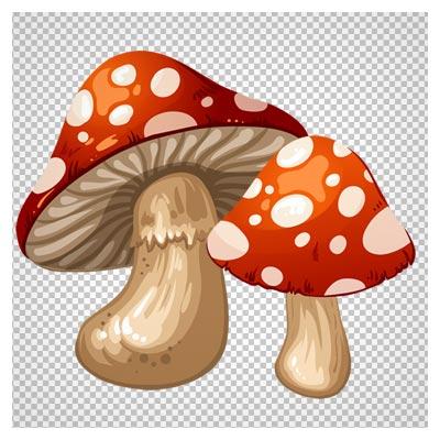 دانلود تصویر کارتونی و دوربری شده قارچ های رنگی (Mushrooms PNG Clip Art)