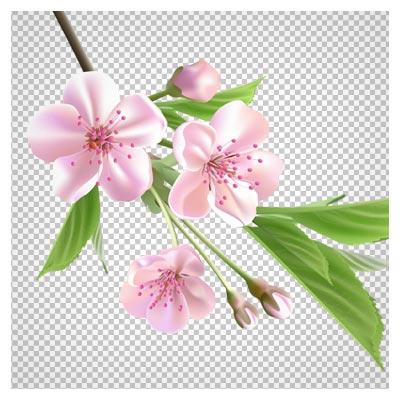 دانلود تصویر دوربری شده png شکوفه های بهاری بدون پس زمینه