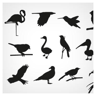 وکتور تکرنگ مجموعه پرنده های مختلف بصورت لایه باز با فرمتهای ai و eps