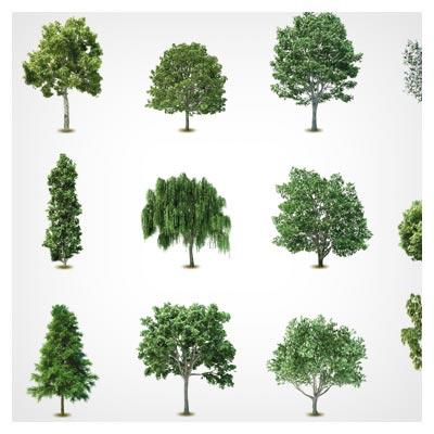 وکتور مجموعه درخت های متنوع بصورت لایه باز با فرمتهای ai و eps