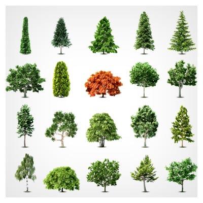 مجموعه متنوع درخت های لایه باز وکتور ، با دو فرمت eps و ai