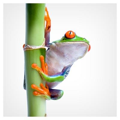 عکس با کیفیت وزغ و قورباغه سبز