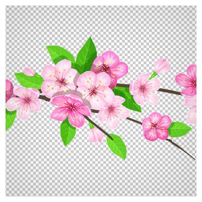 تصویر ترانسپرنت و دوربری شده شکوفه های بهاری صورتی با کیفیت بالا (png)