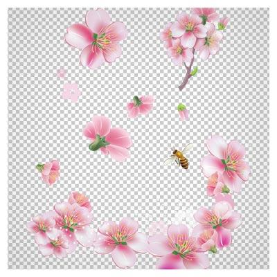 دانلود فایل png شکوفه های بهاری صورتی رنگ و زنبورهای عسل