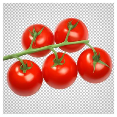 دانلود فایل ترانسپرنت و دوربری شده شاخه گوجه فرنگی با پسوند png