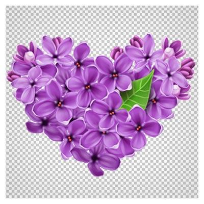دانلود فایل ترانسپرنت و دوربری شده گل یاس بنفش قلبی شکل با پسوند png