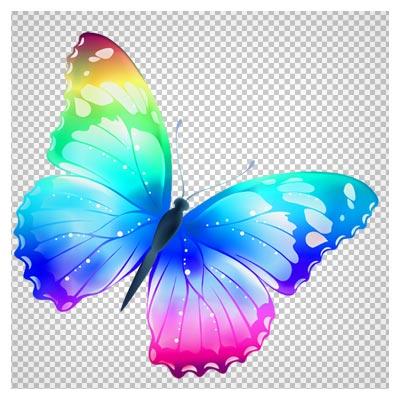 دانلود تصویر دوربریده شده و فاقد بکگرند پروانه هفت رنگ کارتونی به صورت فایل png