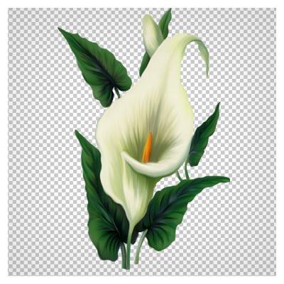 دانلود فایل ترانسپرنت و دوربری شده گل شیپوری سفید با پسوند png