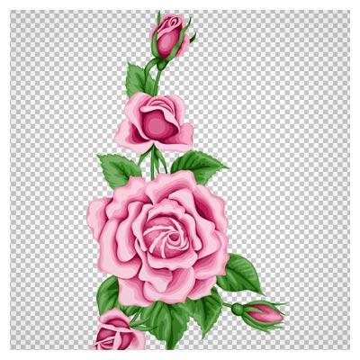 دانلود تصویر دوربری شده و فاقد بکگرند بوته گل رز صورتی به صورت فایل png با کیفیت بالا