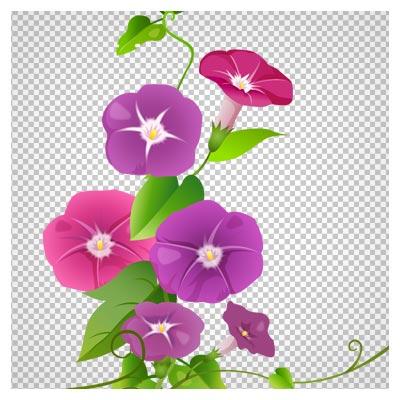 دانلود فایل ترانسپرنت و دوربری شده بوته گل شیپوری و پیچک رنگی کارتونی با فرمت png