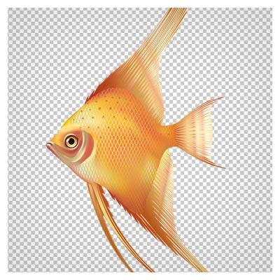دانلود فایل ترانسپرنت و دوربری شده ماهی نارنجی باله کشیده با پسوند png