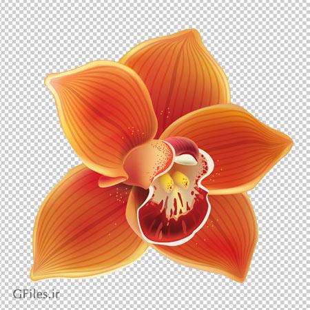 دانلود فایل ترانسپرنت و دوربری شده گل ارکیده با پسوند png