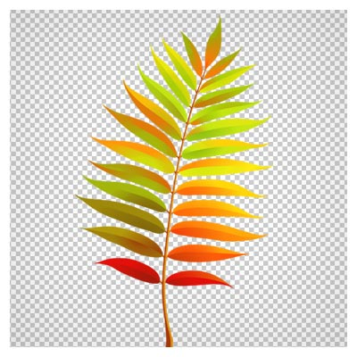 دانلود فایل ترانسپرنت و دوربری شده شاخه پر برگ پاییزی درخت بید با فرمت png