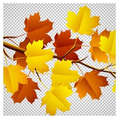 دانلود تصویر دوربری شده و فاقد بکگرند  شاخه درخت و برگهای پاییزی به صورت فایل png با کیفیت بالا