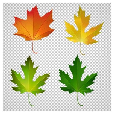 دانلود فایل ترانسپرنت و دوربری شده برگهای چهارفصل درخت چنار با فرمت png
