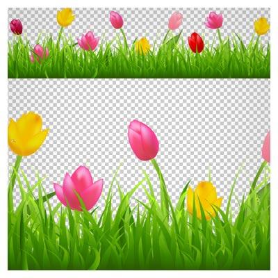 دانلود فایل دوربری شده و بدون پس زمینه گلهای لاله رنگی در چمنزار (لاله زار) با فرمت png