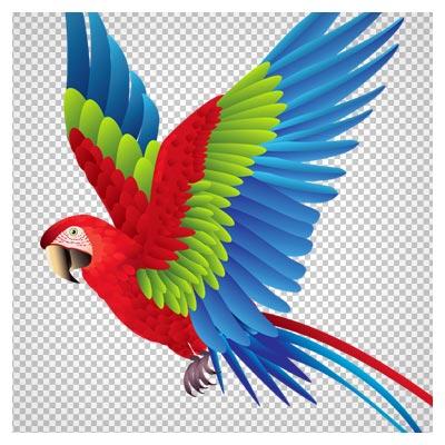 دانلود فایل ترانسپرنت و بدون پس زمینه طوطی رنگارنگ در حال پرواز با پسوند png