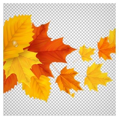 دانلود فایل دوربری شده و بدون پس زمینه برگهای زرد و نارنجی پاییزی با فرمت png