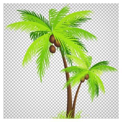 دانلود فایل دوربری شده و بدون پس زمینه درخت های بلند نارگیل با فرمت png
