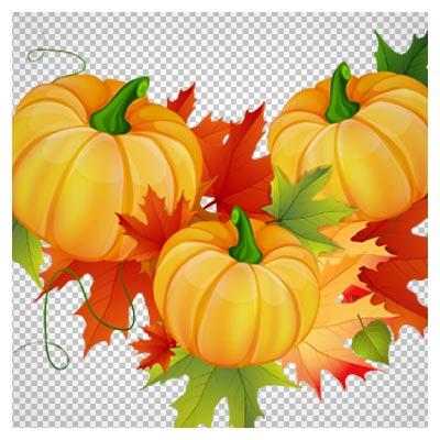 دانلود تصویر دوربری شده و فاقد بکگرند سه کدو تنبل با برگ های پاییزی به صورت فایل png با کیفیت بالا