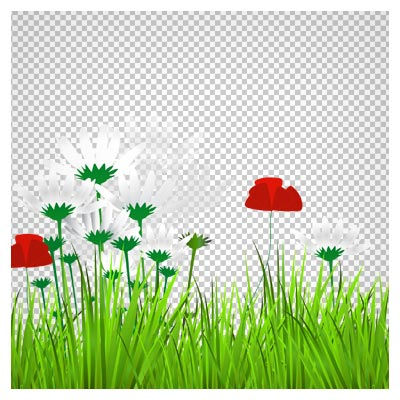 دانلود تصویر بدون پس زمینه و دوربری شده سبزه و گل های بابونه و لاله با پسوند png