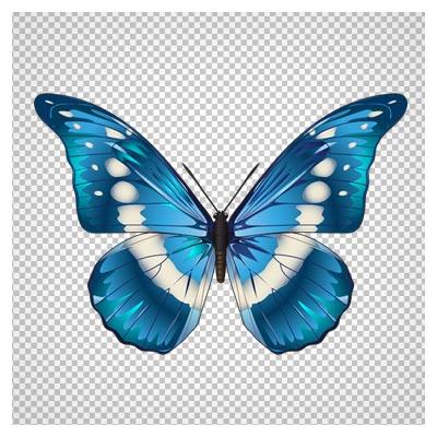 دانلود تصویر تک پروانه ی آبی طرح دار بصورت فایل دوربری شده و بدون بکگرند