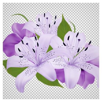 دانلود تصویر دسته گل بنفش تزئین شده بصورت فایل دوربری شده و فاقد پس زمینه