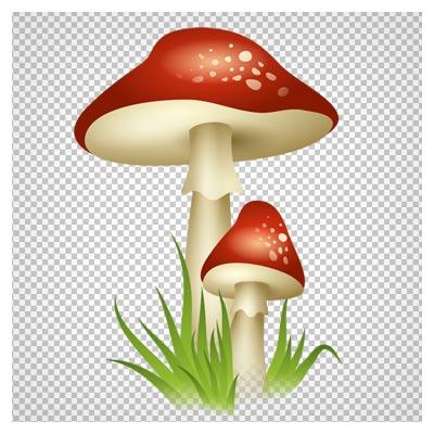 دانلود قارچ های قرمز بلند وحشی دوربری شده و بدون پس زمینه با فرمت png