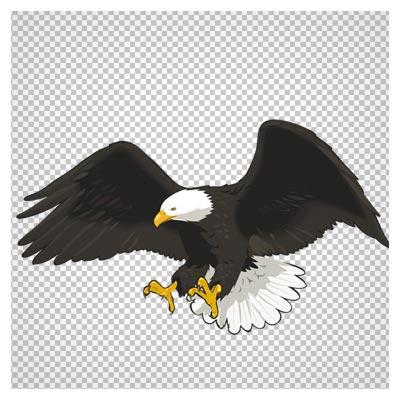 دانلود تصویر دوربری شده عقاب در حال شکار با فرمت png