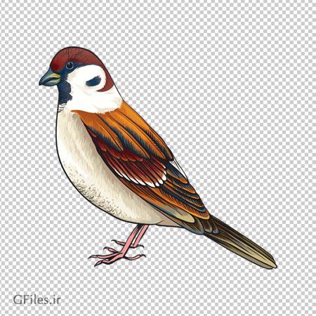 دانلود فایل دوربری شده پرنده ایستاده (گنجشک) قهوه ای با فرمت png
