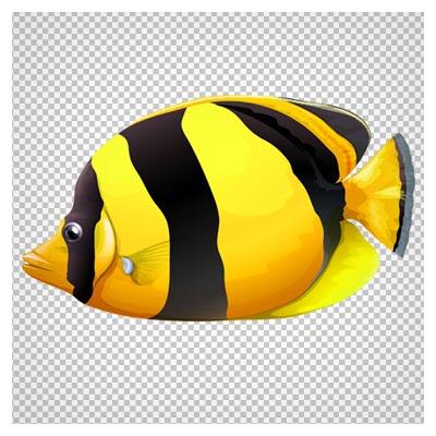 دانلود ماهی استوایی زرد و سیاه فاقد بکگرند با فرمت png