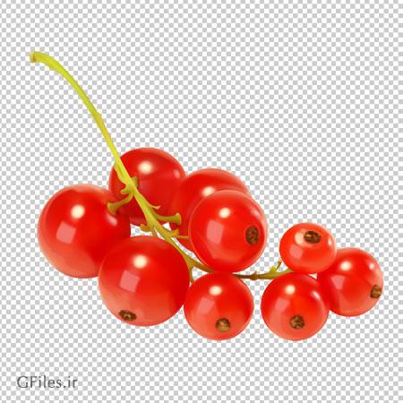 دانلود خوشه کویج (زالزالک) قرمز بصورت فایل با پسوند png و بدون پس زمینه